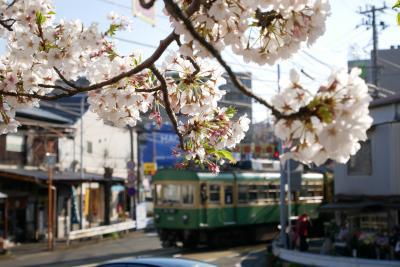江ノ電各駅停車のお花見ツアー備忘録(藤沢~極楽寺+鎌倉飲み)
