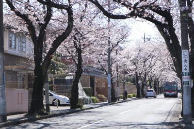 あざみ野駅周辺のお花見スポット