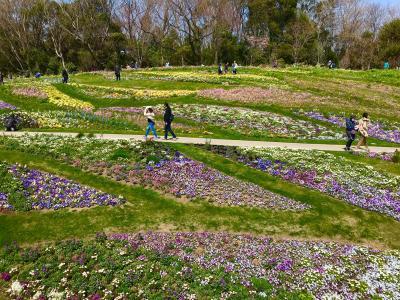 横浜 里山ガーデンでのお花見は寒かった~
