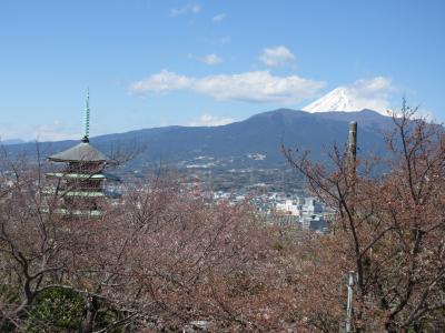 2019年香貫山桜…ちょっと早かった…