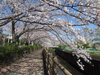 2019年門池公園桜見物…