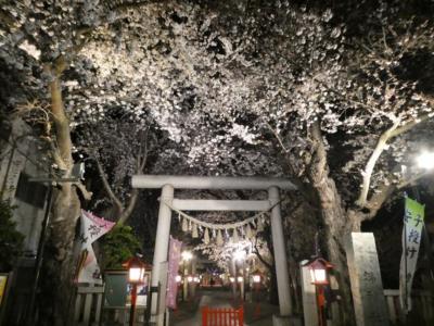 埼玉・鴻巣の夜桜2019~鴻巣公園と鴻神社のライトアップ~