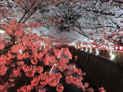 '19 目黒川桜さんぽ3 ~夜編②~