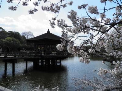 桜咲く春の奈良 2019