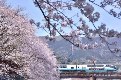 湯河原駅周辺に咲き広がる満開な桜の風景を探しに訪れてみた