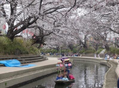 埼玉・吹上のさくらまつり2019~元荒川沿いの桜並木~
