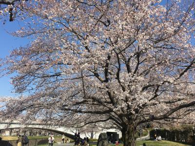 春休みの孫と工場見学、花見、墓参り
