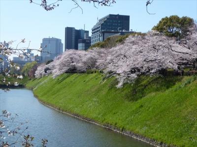 東葉東京メトロパスで行く皇居&千鳥ヶ淵の桜見物と豊洲市場観光《前編》。
