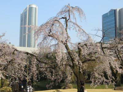 文の郷 文京区内の桜を追って 六義園~伝通院~牛天神~小石川後楽園