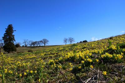 ◆美し島ふく島・水仙の丘