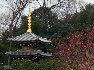 成城散歩Ⅱ(近隣の文化財を巡る)