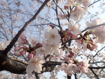 2019年4月 姫路でのお花見と西国三十三ヶ所巡礼 =26番 一乗寺、27番 園教寺=