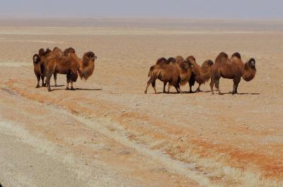 冬のモンゴル・シベリアへの旅1 北京からウランバートルまで 陸路最速1泊2日バスの旅 (Heading to Ulanbaatar)