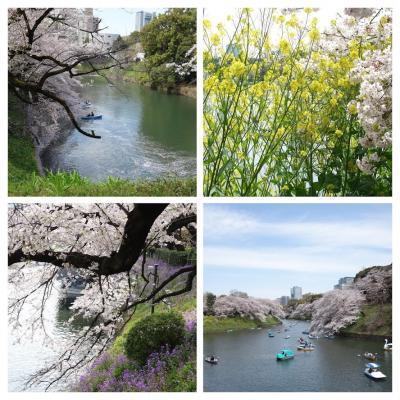 2019 桜満開~散り始めの千鳥ヶ淵