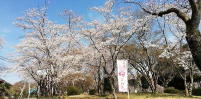 桜川もだいぶいいかんじになつてきました。