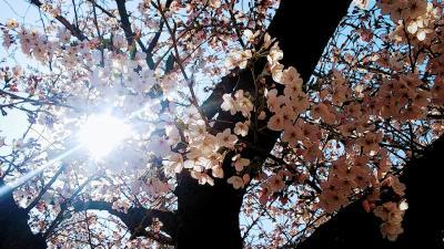 春の京都に行ってみよう