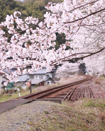 錦川清流線に乗ってみた