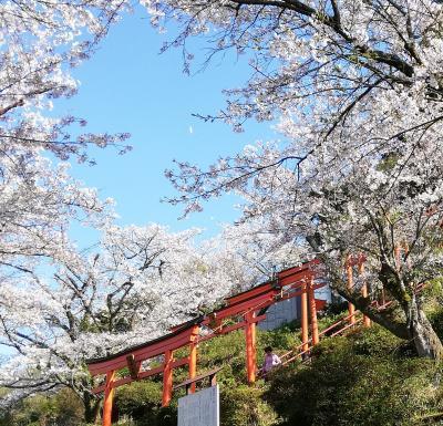 春の「浮羽稲荷神社」と「流川の桜並木」