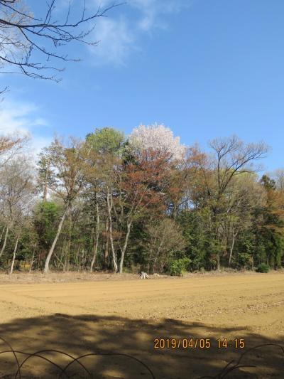 新緑と山桜とが見られた森のさんぽ道①