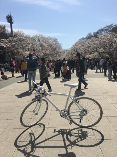 2019年04月  桜を求めて