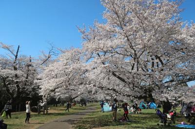 2019年 お花見ドライブ 泉自然公園(千葉市)ほか