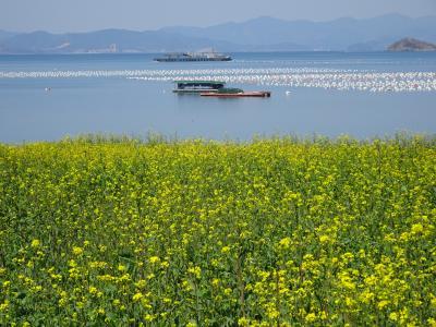 巨済島 桜の穴場スポット