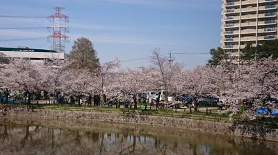 亀城公園とみどり川の夜桜