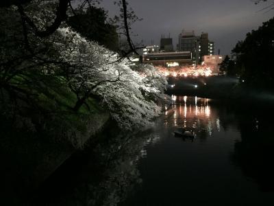 九段の満開桜🌸。