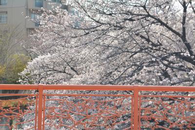 東京散歩 王子、音無親水公園から石神井川を板橋駅に向かって歩きました。