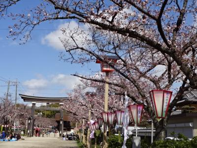 H31年 国府宮神社 桜の参道
