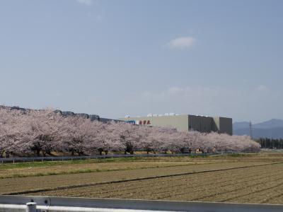 坂戸市にっさい花みず木桜散歩