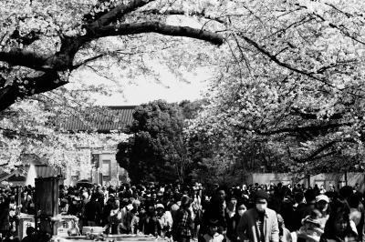 大混雑の上野公園にて内なる齋藤飛鳥が毒を吐く「お前らどうせ花見というとここしか思い浮かばねえんだろ」