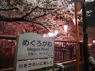目黒川で夜桜鑑賞 -2019.4.6-