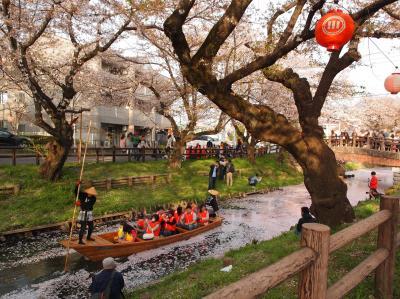 桜満開川越 御朱印巡り 中院、喜多院、三芳野神社、氷川神社、新河岸川の桜