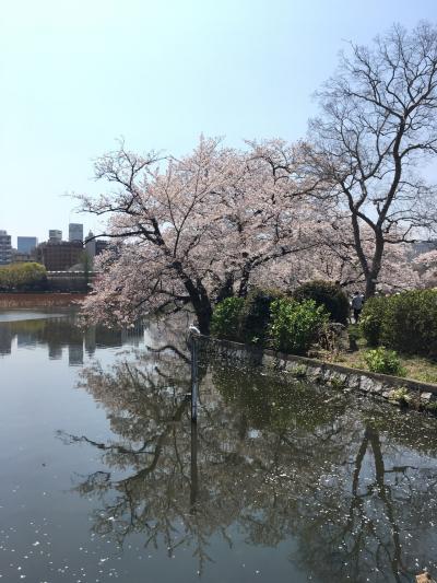 ちょびれおばちゃまと行くお花見2019@上野公園