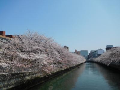 東京2019桜 【6】仙台堀川公園&大横川