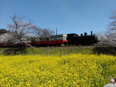 春本番!桜と菜の花を求めて☆千葉のローカル鉄道 沿線歩き旅 (前編)