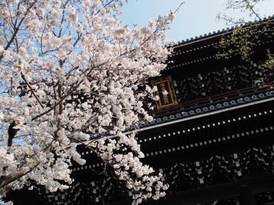 桜を愛でる旅 ~京都~