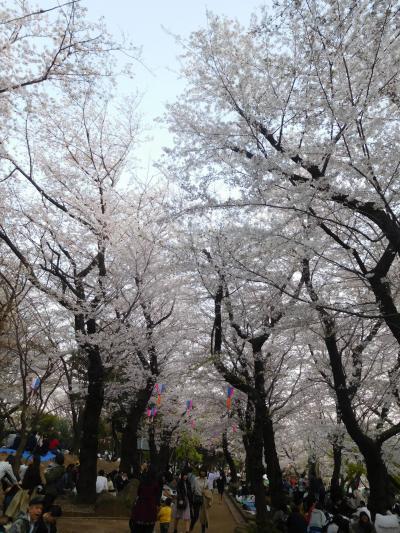 東京2019桜 【8】飛鳥山公園
