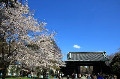 平成最後の皇居乾通り一般公開&日比谷公園、北の丸公園、皇居東御苑でお花見