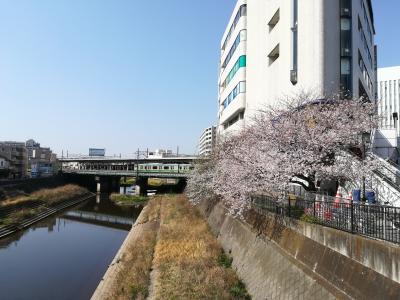 【ちふ散歩】柏尾川の桜。戸塚をふらふらと歩いてみたよ。花見をしている人がいっぱいでした。