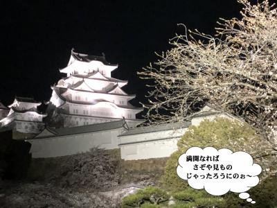 なんたる偶然!4月6日『城の日』美白城と夜桜のコラボ!