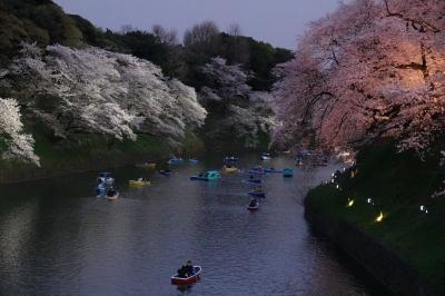 千鳥ヶ淵 桜ライトアップ2019 初見