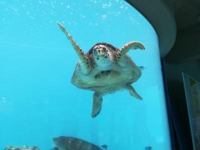 ジェットスター×美ら海水族館・海洋博公園・備瀬のフクギ並木道