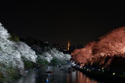2019年春 千鳥ヶ淵で夜桜を愛でる