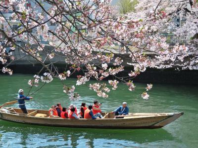 """""""平成最後の春"""" 都内お花見スポットへ遊びに行こう!(・ω・)/♪"""