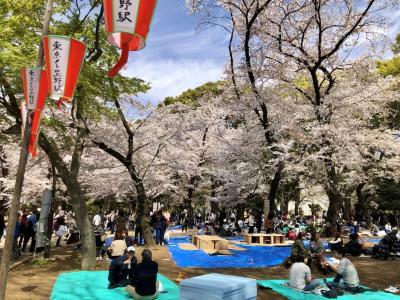 東京下町を巡る旅(上野-浅草-立石)上野編 お花見をしなかった人はご覧ください。(#^.^#)