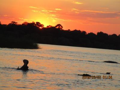 南部アフリカ4カ国周遊の旅 その② ザンベジ川サンセットクルーズ