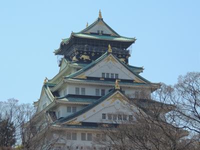 大阪城公園の桜が満開