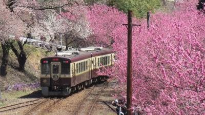 わたらせ渓谷鐵道 花桃まつり